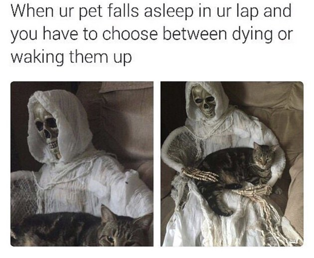 Meme about not wanting to get up when your pet is sleeping on you
