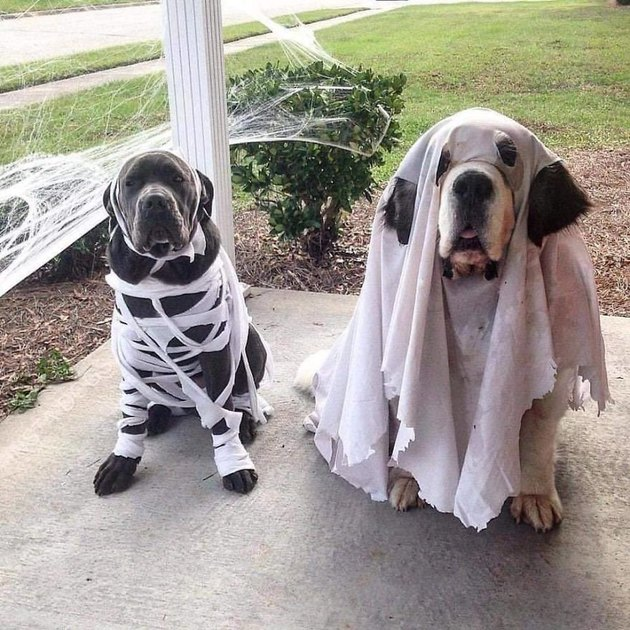 dog in a mummy costume and dog in a ghost costume
