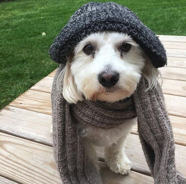 dog in hat and scarf