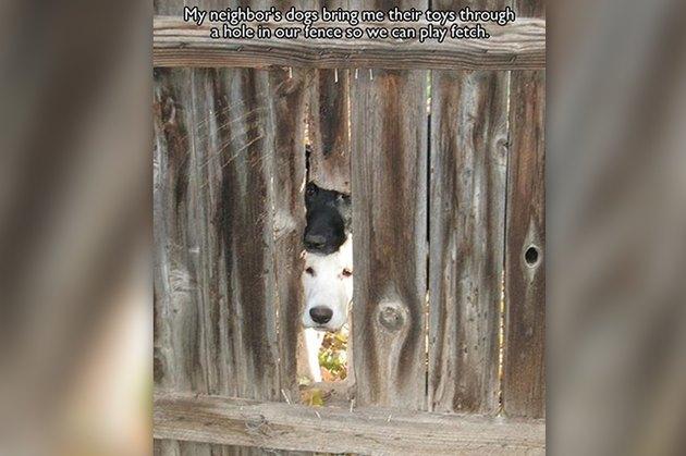 Dogs Peeking At You Through Fences