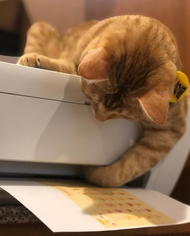 cats wants to know how printer prints