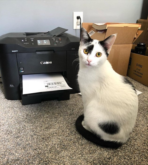 cat poses in front of printer