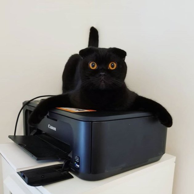 cat claims printer for its own