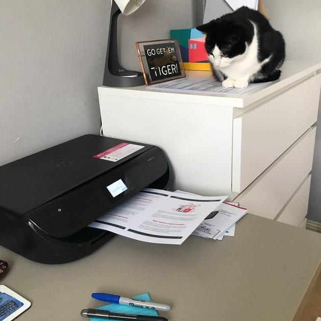 cat looks down on printer