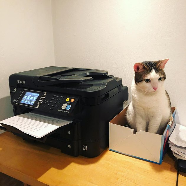 cat sits in box next to printer