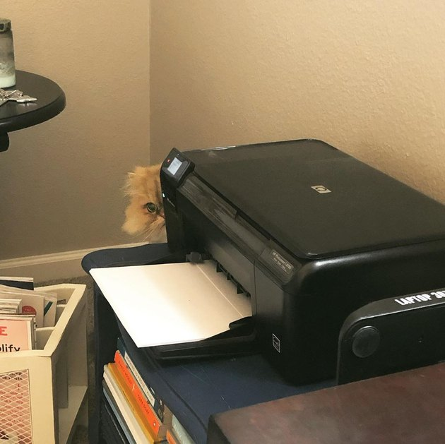 cat hides behind printeer