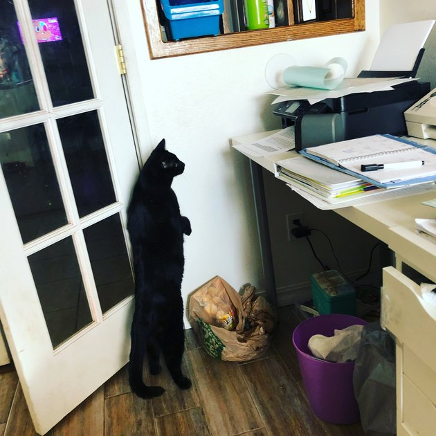 cat stands on two legs to look at printer