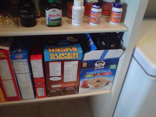 Cat hiding in oatmeal box