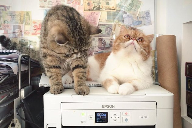 cats confused by printer