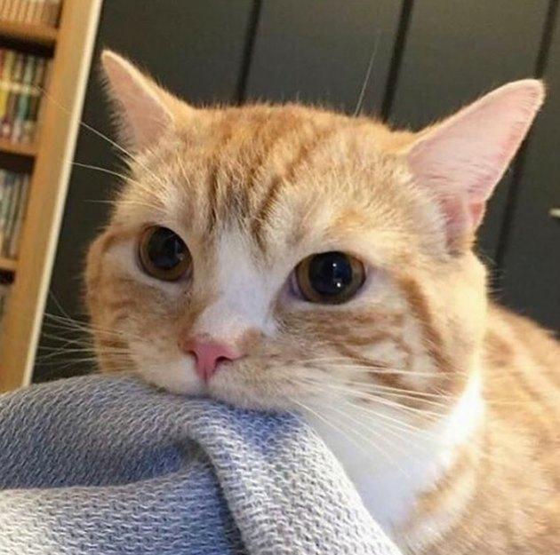 Cat biting a blanket.