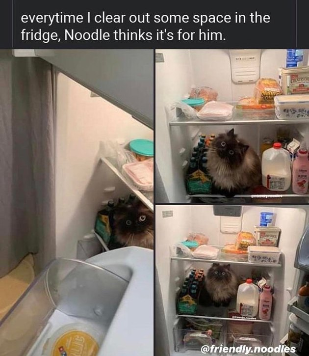 Cat sitting in a refrigerator.