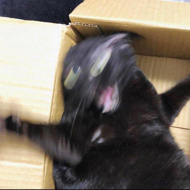 Blurry cat in a cardboard box.