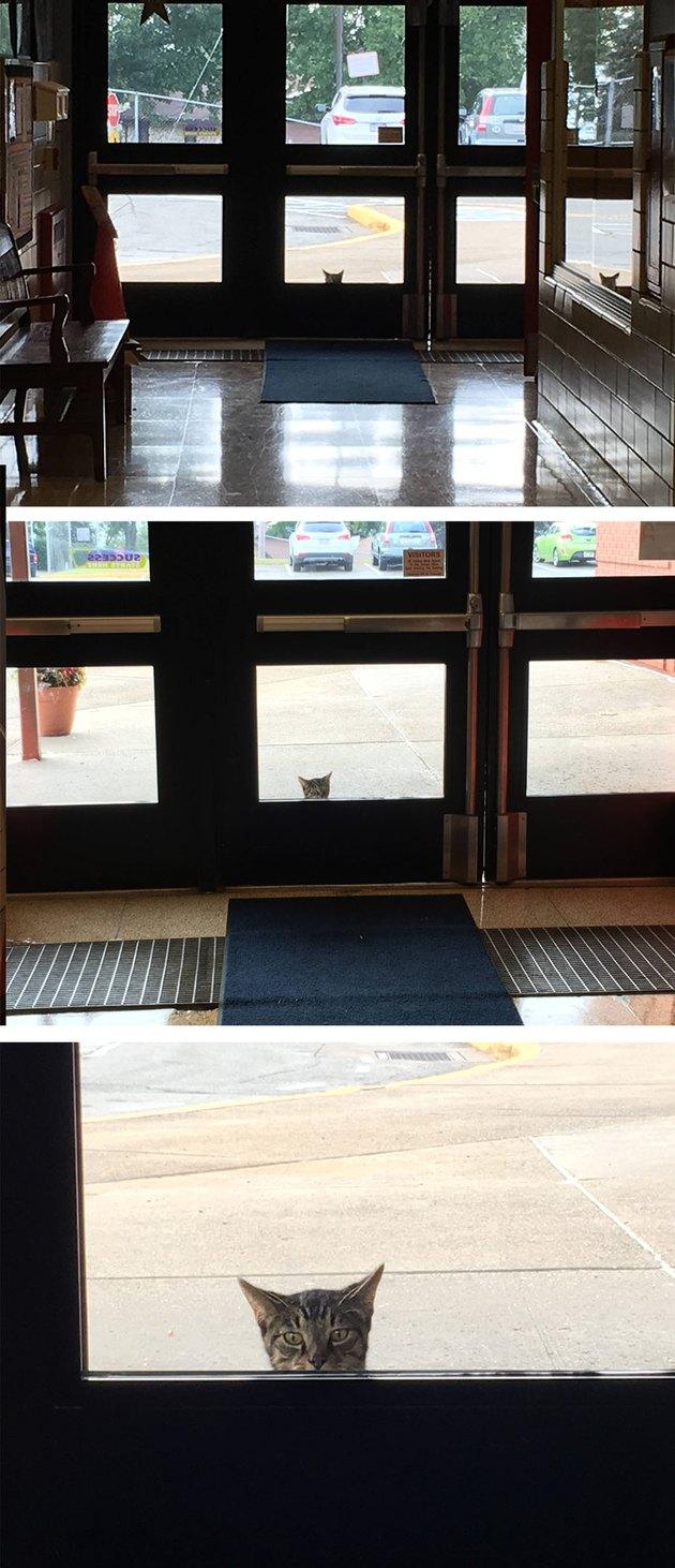 Cat waiting outside school.