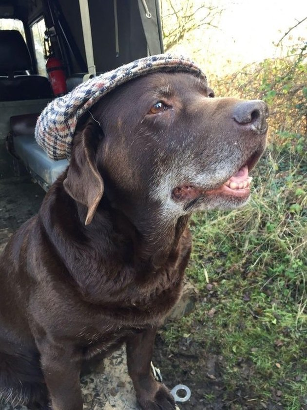 Old dog wearing golf hat.