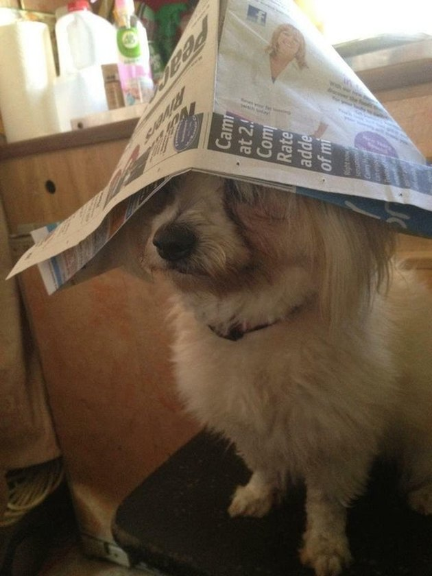 Dog wearing paper captain's hat.