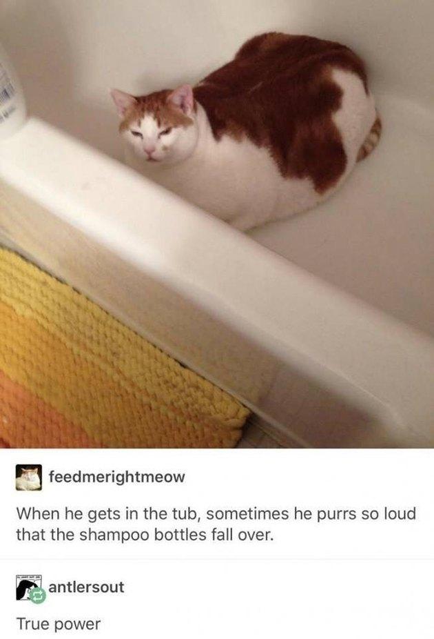 Big cat in a bathtub