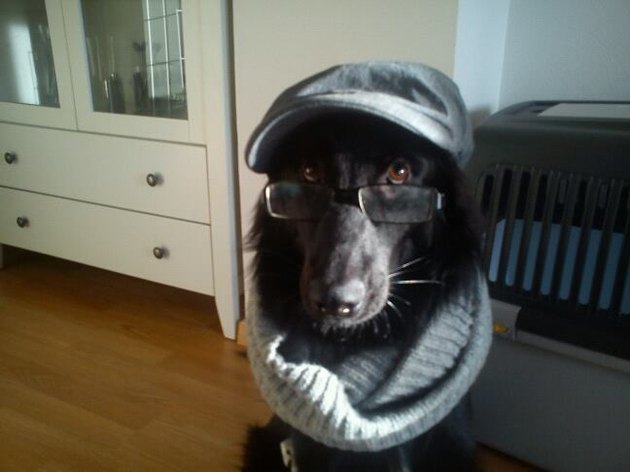 Dog wearing newsboy hat, glasses, and infinity scarf.
