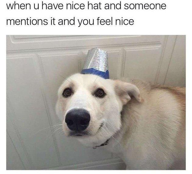 Dog wearing nice hat.