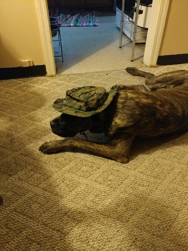 Dog wearing camouflage hat.