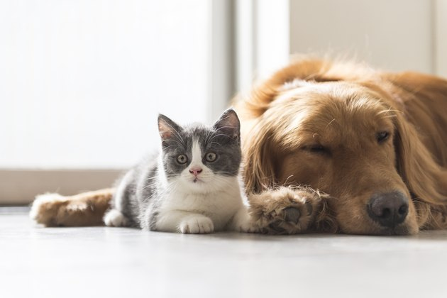 kitten and dog snuggle together