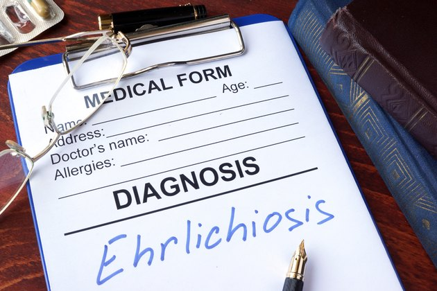 Medical form with diagnosis Ehrlichiosis in a hospital.