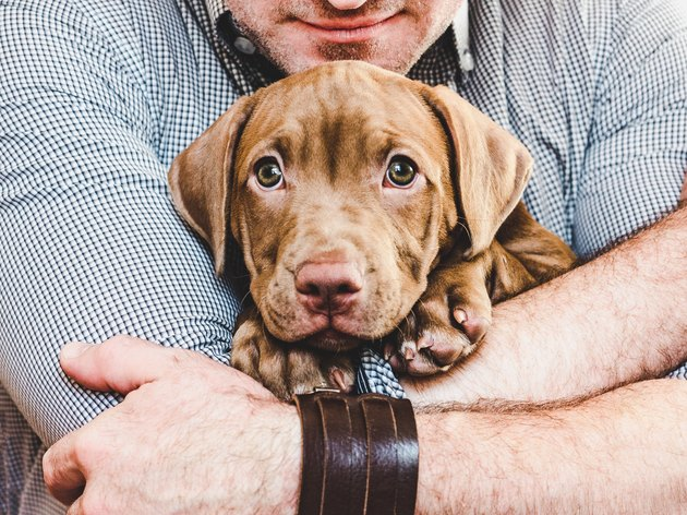 Man hugging a young, charming puppy. Close-up