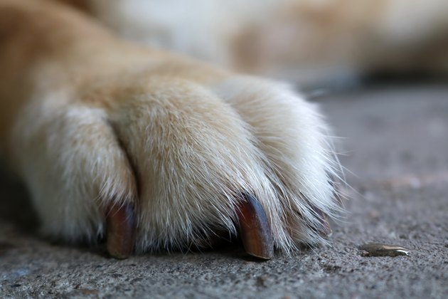 Dog foot on the floor