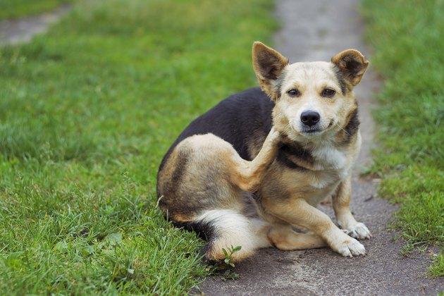 dog posing outdoors
