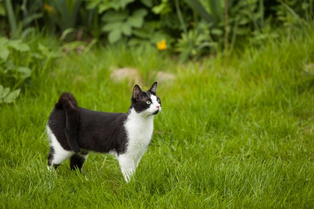 Cat Standing On Field