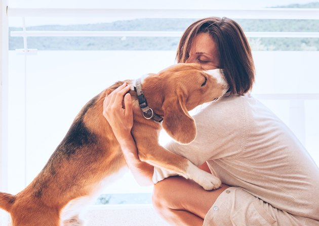 Tender home scene with woman owner and her beagle dog