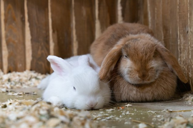 two rabbits white and red sitting in the cage