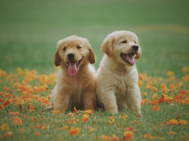 Puppies Amidst Flowers On Field