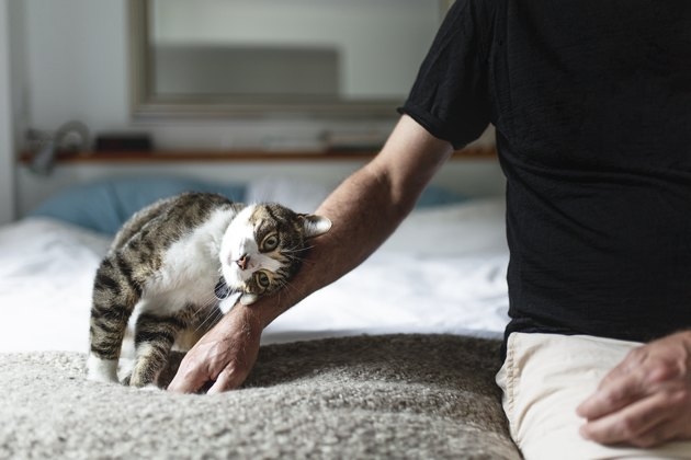 cat rubbing against man's arm on bed