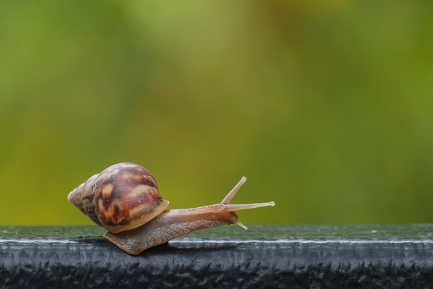 snail on green blur background