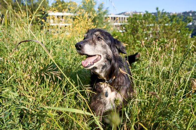 Portrait of dog on a meadow