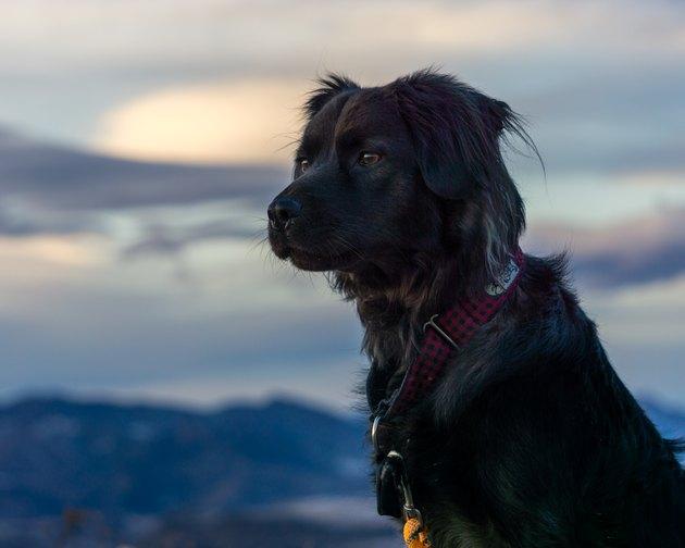 Black Dog Hiking