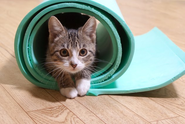 Kitten rolled up in the middle of a yoga mat