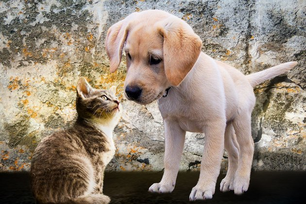 Close-Up Of Kitten Looking At Puppy Against Stone Wall