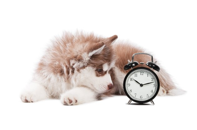puppy with clock time