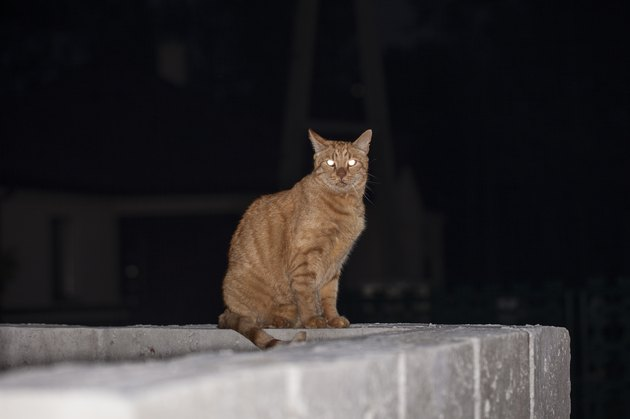 ginger cat sitting on a fence at night