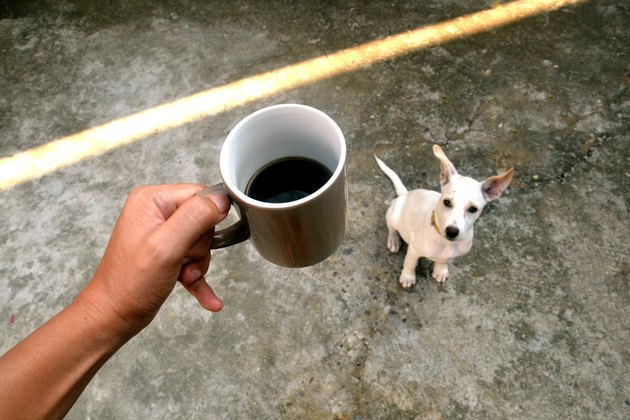 Morning coffee with dog