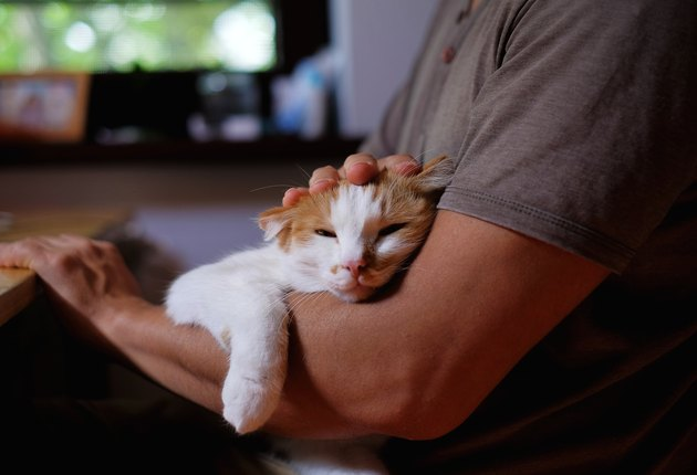 Cute cat lying on man's arm