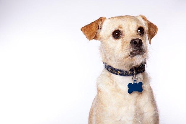 Goofy Dog Portrait with Copyspace