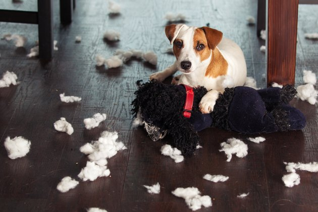 dog among stuffed animal fluff