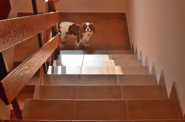 Doggy on Stairs