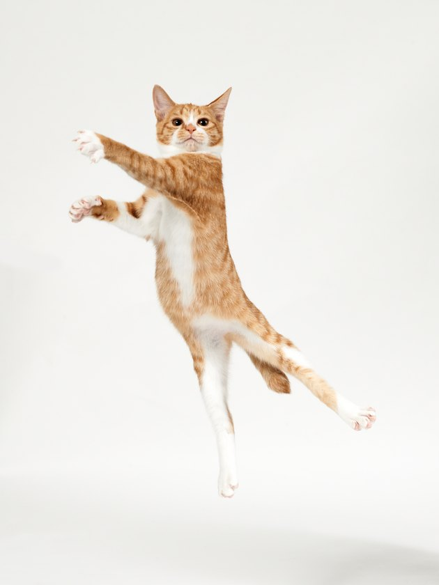 Ginger kitten jumping in the air