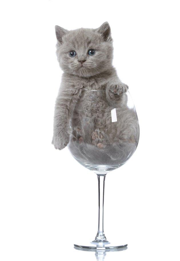 kitten in a wine glass