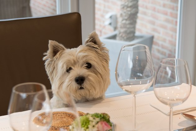 Dog at the dining table