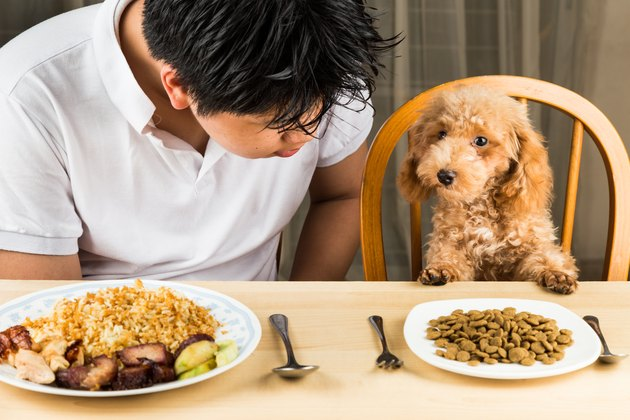 Young Man And Dog With Food On Table Sitting At Home