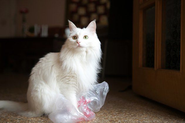 White Cat Playing With Plastic Bag